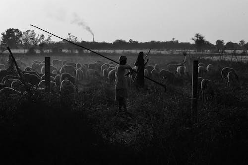 Fotos de stock gratuitas de agricultor, cultura, gente
