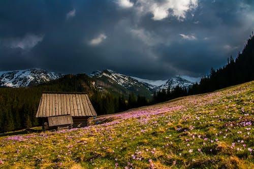 Foto d'estoc gratuïta de a pagès, alba, arbres, bonic