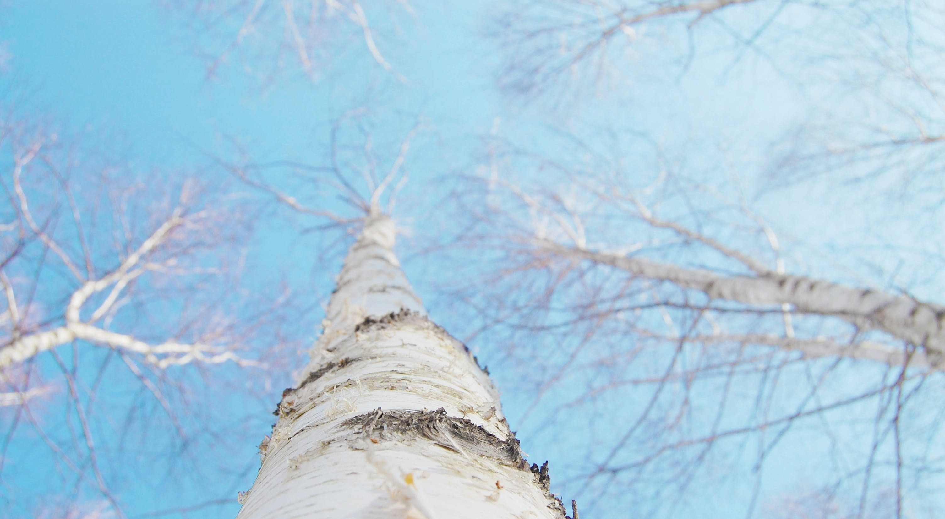 Free stock photo of wood, nature, sky, blue