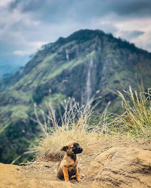 Gratis lagerfoto af bjerg, dagslys, græs, høj