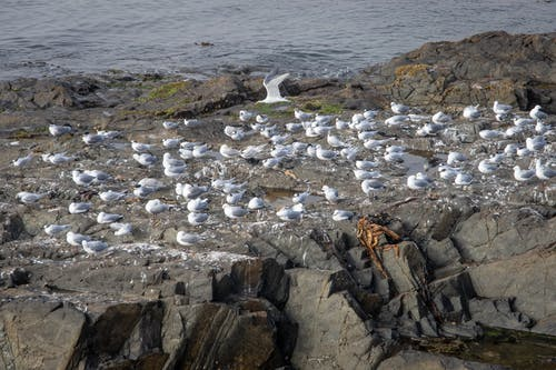 White Birds on Brown Rock Formation Near Body of Water