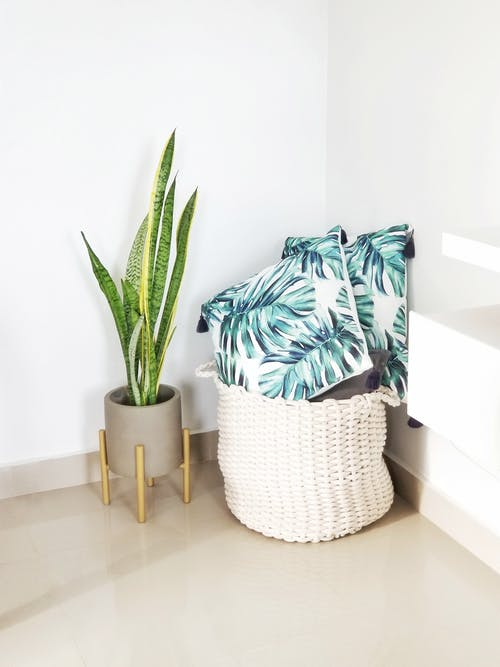 Laundry Hamper with Pillows Next to Potted Plant
