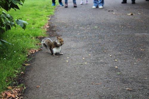 Free stock photo of animal park, park, squirrel