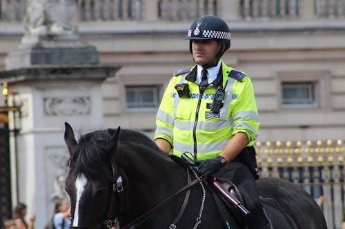 Free stock photo of black horse, horse, police