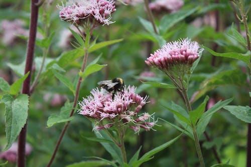 Free stock photo of beautiful flowers, bee, flowers