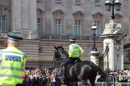 Free stock photo of black horse, central london, policemen