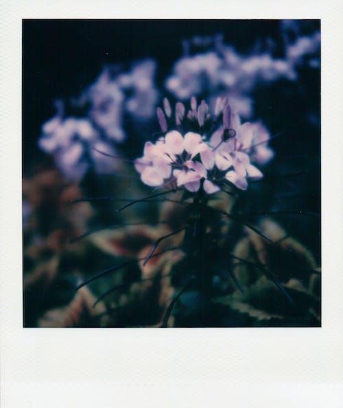 계절, 광장, 꽃이 피는, 색깔의 무료 스톡 사진