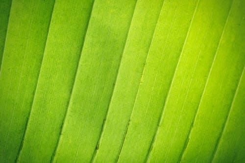 Gratis lagerfoto af baggrund, blad, botanik, detaljer