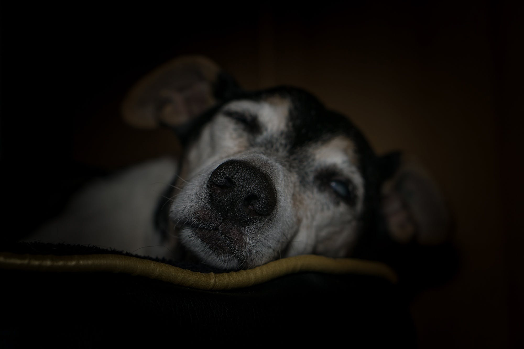 Free stock photo of animal, animal shelter, blind, care dog