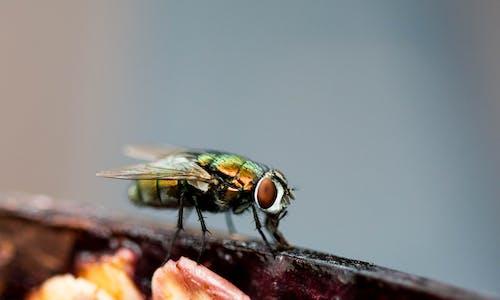 Зеленая муха сидит на розовом цветке в фотографии крупным планом