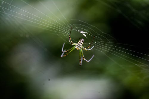 Бесплатное стоковое фото с зеленый, зеленый паук, интернет