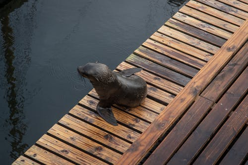 Seal on Brown Wooden Floor