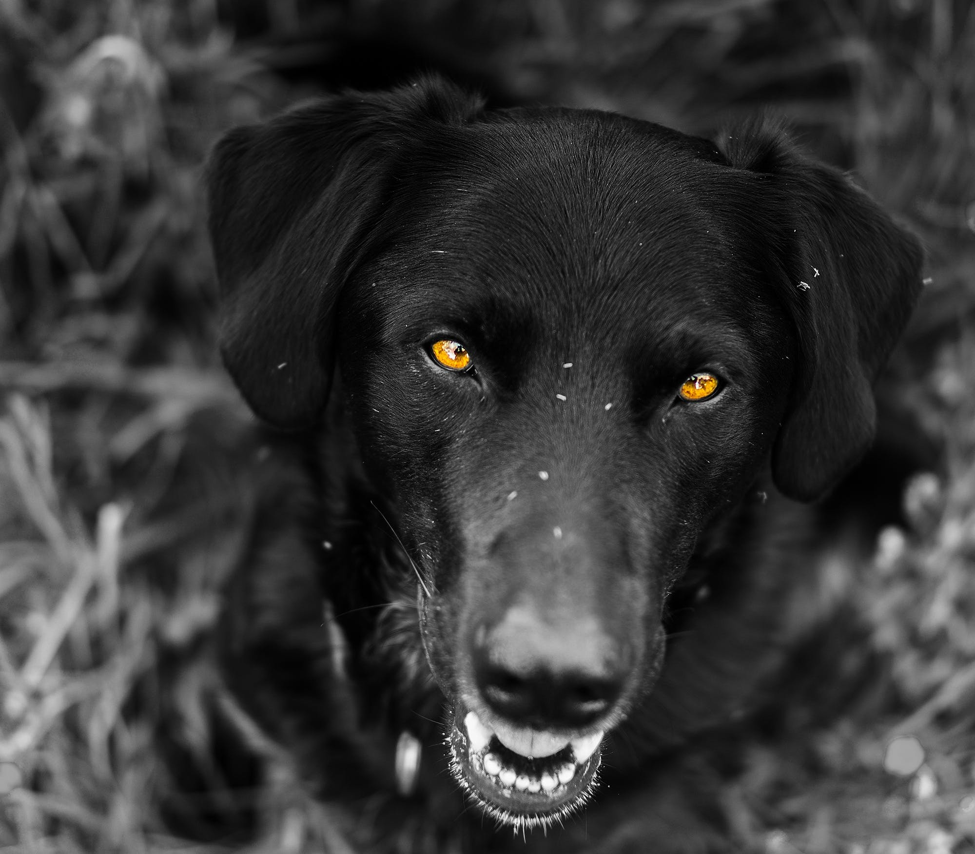 animal photography, animal portrait, blur