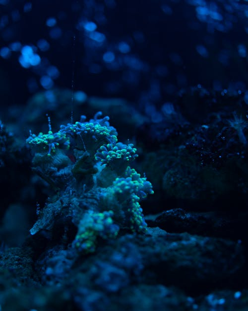 Close Up Photo of Coral Reefs