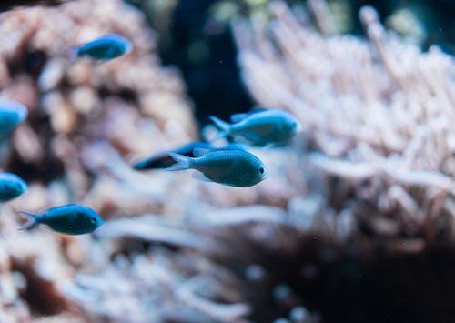 açık hava, akvaryum, balık, balıklar içeren Ücretsiz stok fotoğraf