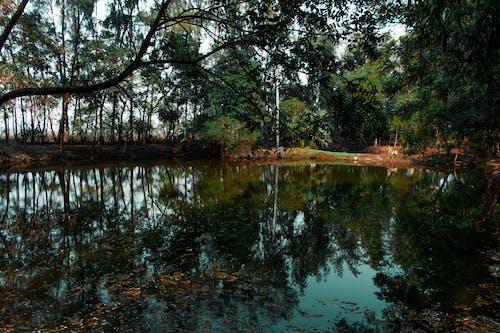 Ingyenes stockfotó erdő, esés, fák, fény témában