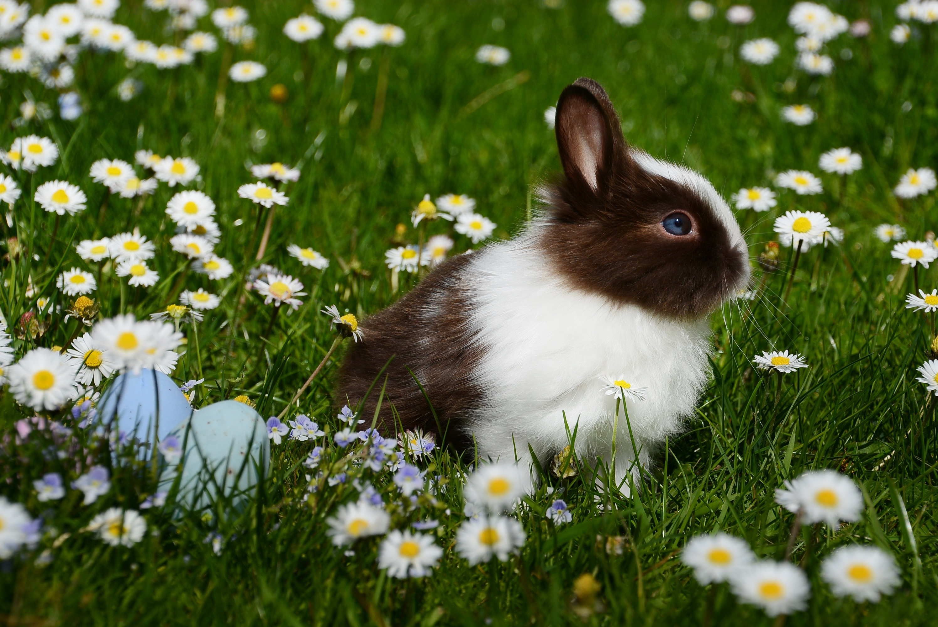 White and Brown Rabbit on Green Grass Field