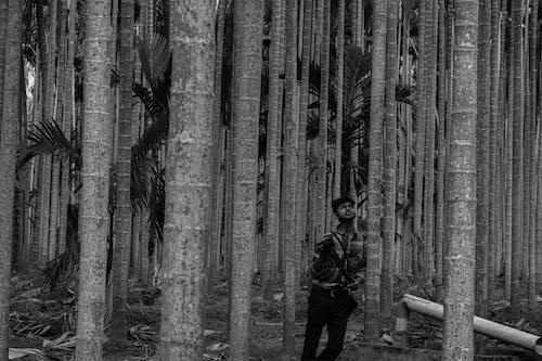 Foto d'estoc gratuïta de arbres de bambú, asiàtics, blanc i negre, bosc