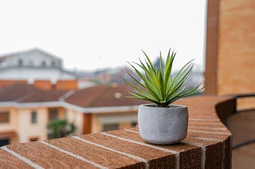 Grüne Pflanze Im Grauen Topf Auf Brauner Backsteinoberfläche