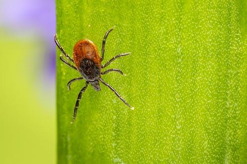 Коричневый и черный паук на зеленой поверхности