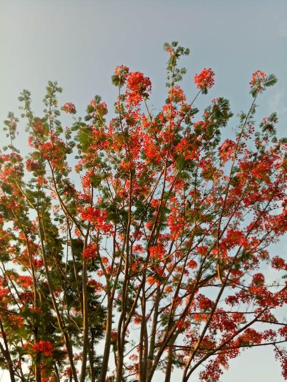Základová fotografie zdarma na téma abstraktní foto, Filipíny, krásná květina