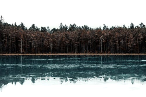 Trees Beside Body of Water
