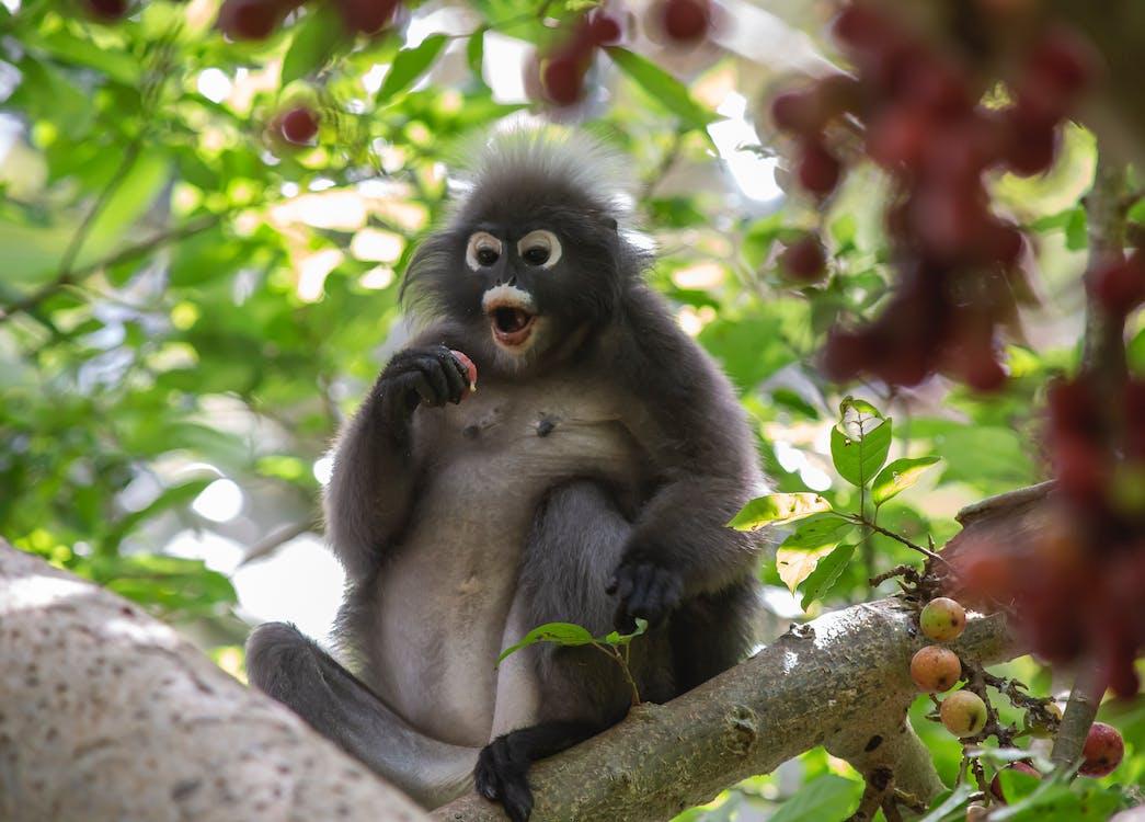 Brown Monkey on Tree Branch
