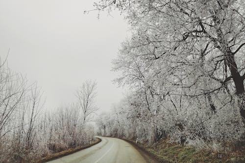 Základová fotografie zdarma na téma dřevo, klid, klidný, krajina