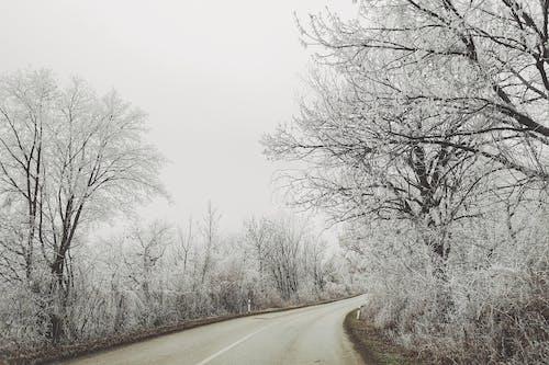 Základová fotografie zdarma na téma klid, klidný, silnice, sníh