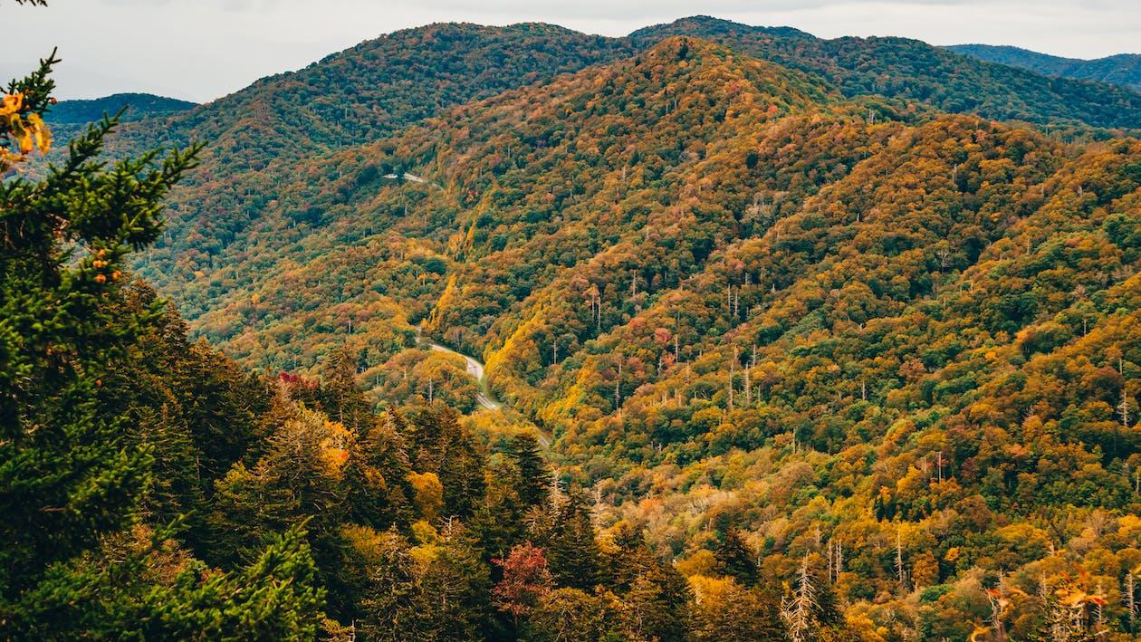 가을, 가을 색, 경치