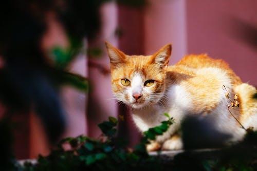 Free stock photo of cat, caught, garden