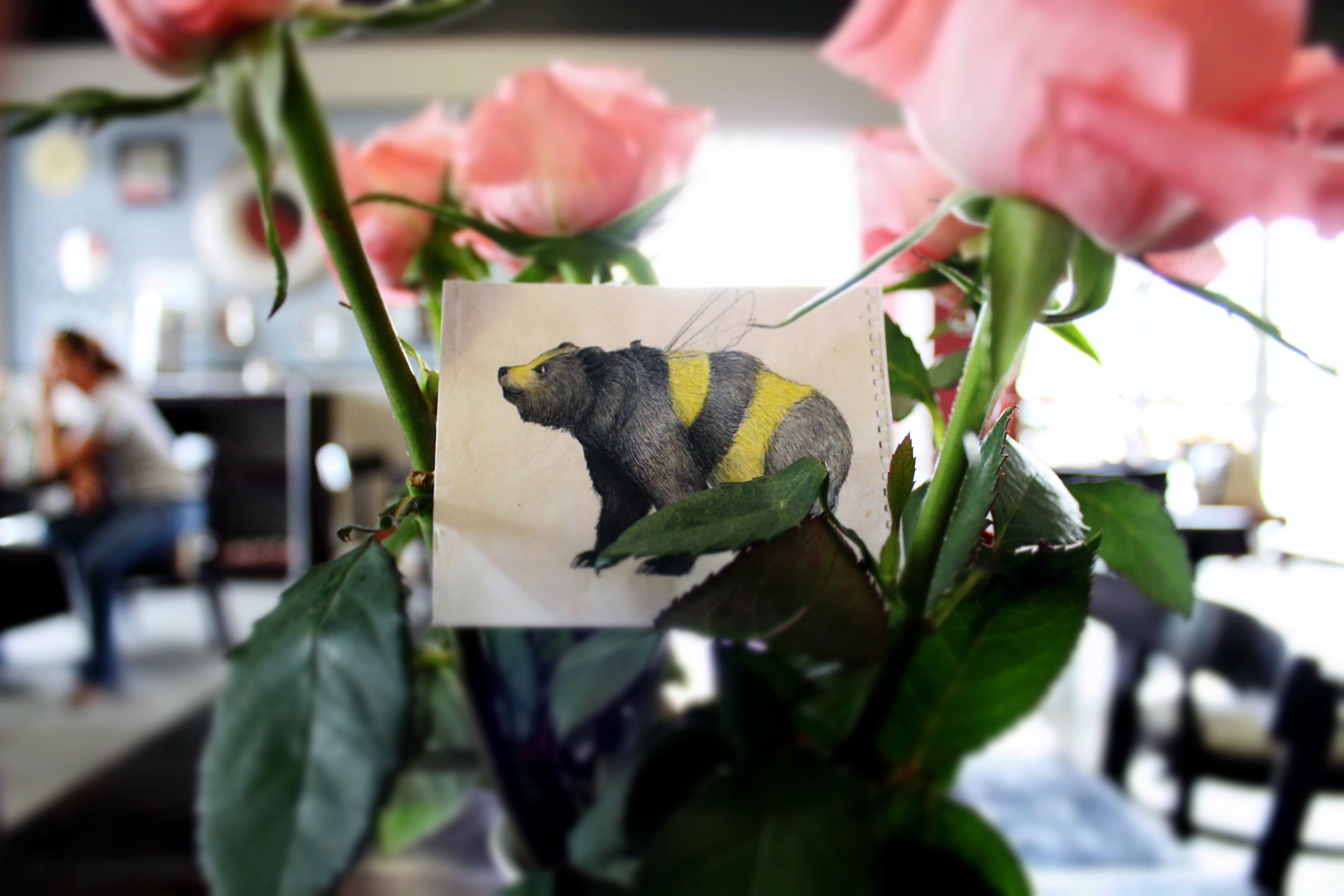 Free stock photo of bear, bee, blurred background, card