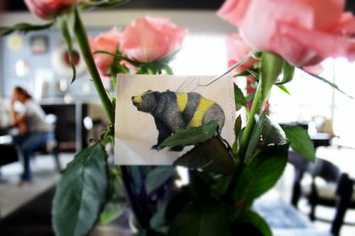 คลังภาพถ่ายฟรี ของ การ์ด, ดอกกุหลาบ, ผึ้ง, พื้นหลังเบลอ