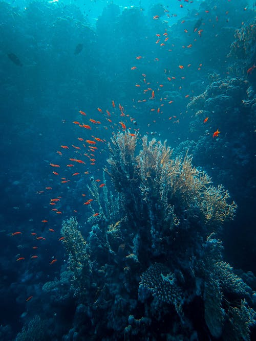 Photo of School of Fish Near Coral Reef