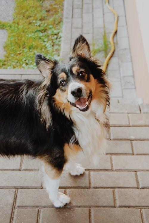 Free stock photo of cute, dog, unique