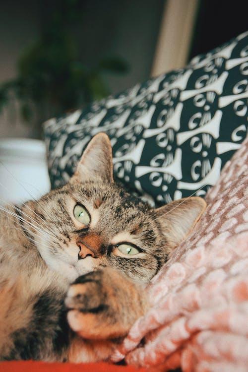Free stock photo of cat, cute