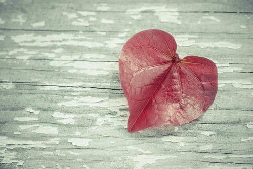 Free stock photo of beauty in nature, heart, leaf