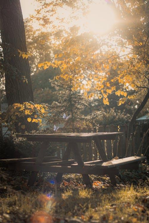 Free stock photo of 50mm, autumn leaves, back light, Beautiful sunset