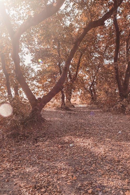 devrilmiş ağaç, güz, HD duvar kağıdı, orman içeren Ücretsiz stok fotoğraf