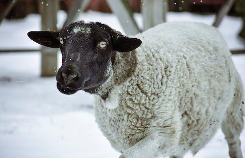 冬季, 冷, 動物, 可爱的动物 的 免费素材照片
