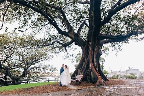 Free stock photo of australian wedding, beautiful bride, big tree, Bride and Groom