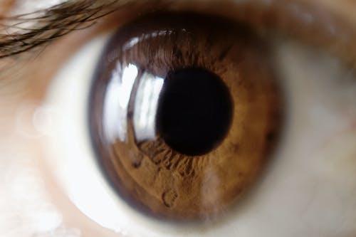 Free stock photo of baeutiful eyes, big eyes, body, brown eyes