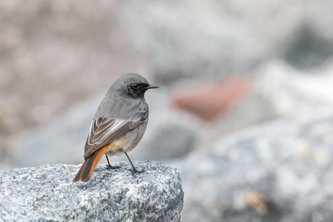 Selective Focus Photo of Black and Brown Short-beaked Bird