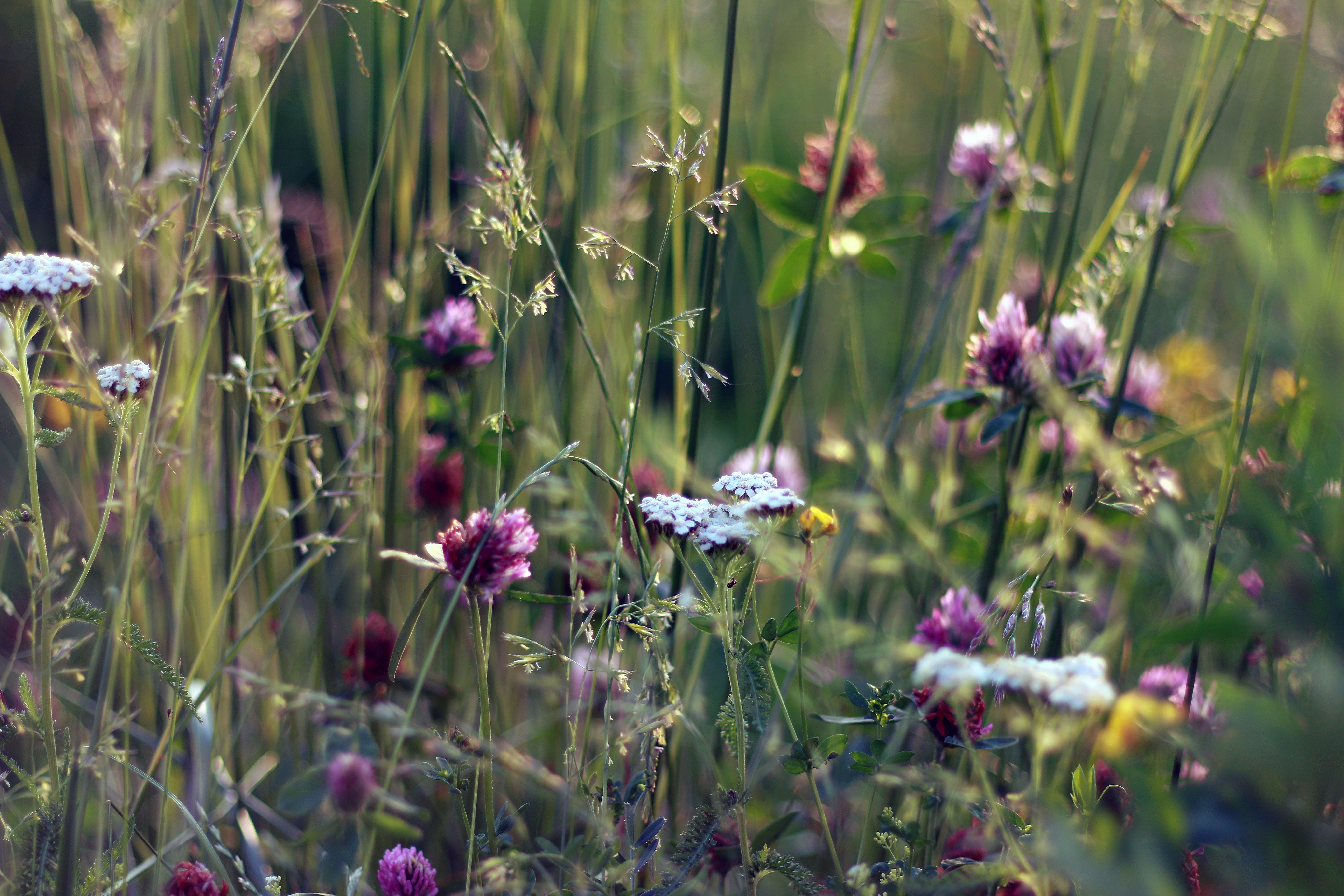 Kostenloses Stock Foto zu blumen, feld, gras, natur