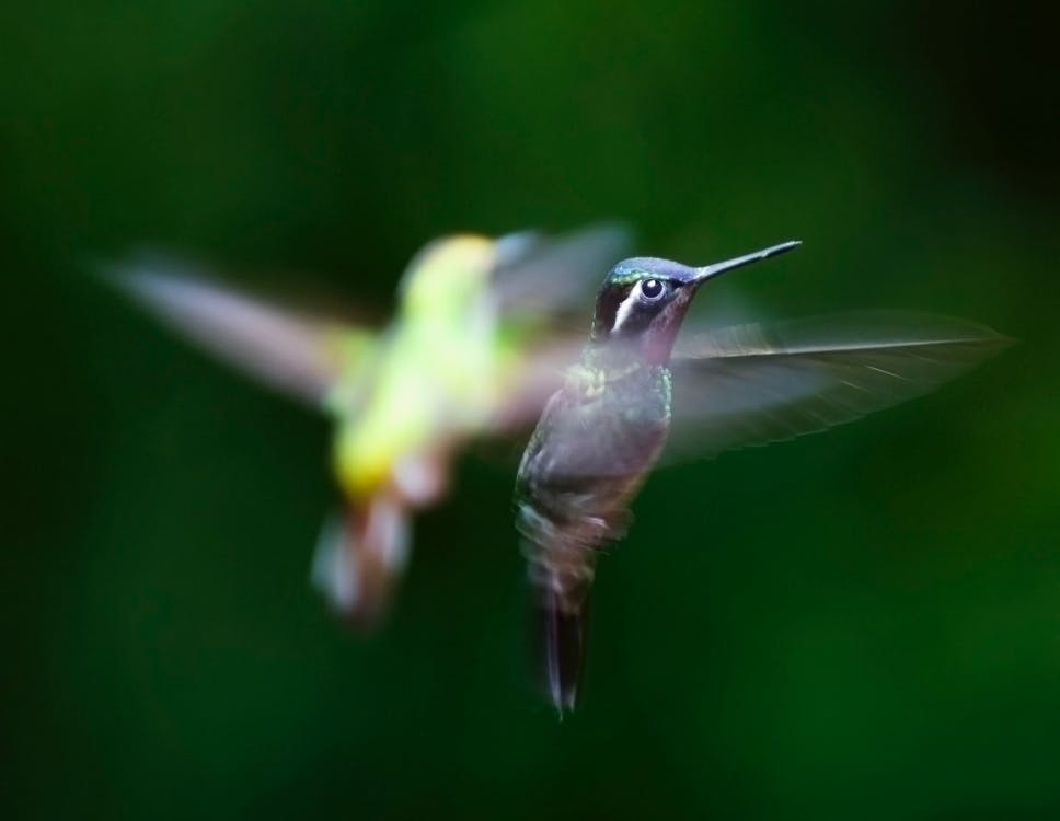 Two Green and Black Hummingbirds