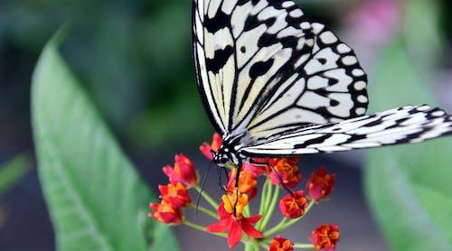 Fotos de stock gratuitas de alas, animal, baumnymphe blanco, biología