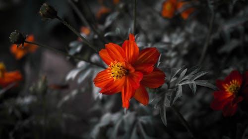 Бесплатное стоковое фото с цветы