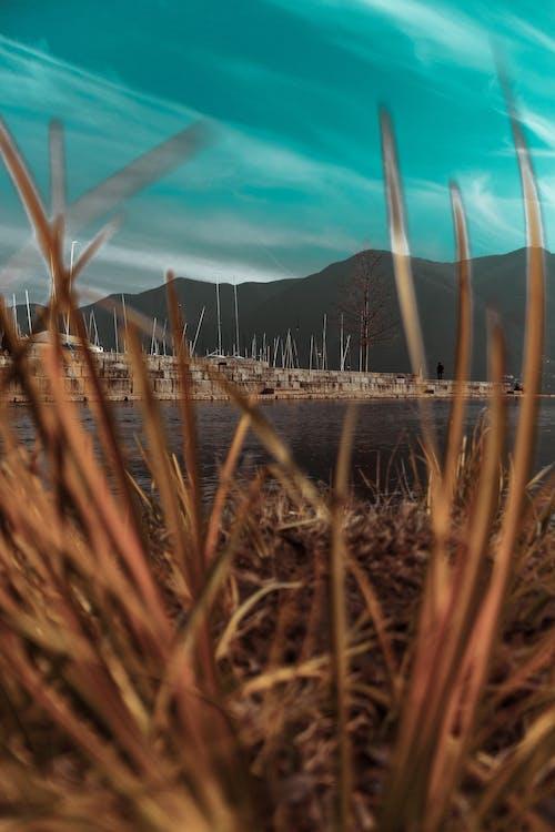 Foto d'estoc gratuïta de aigua, arbre, arbres, blau