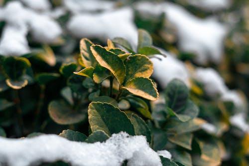 公園, 冬季, 冷 的 免費圖庫相片