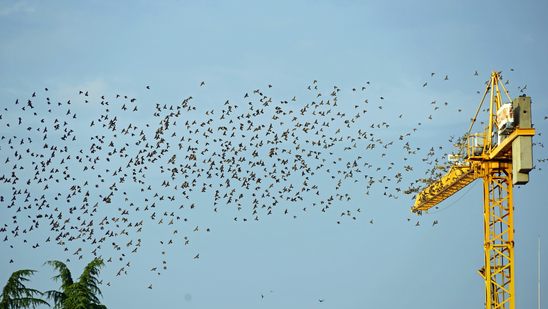Free stock photo of bird migration, crane, departure, flock of birds